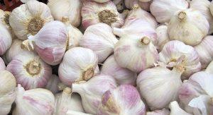 garlic blood pressure