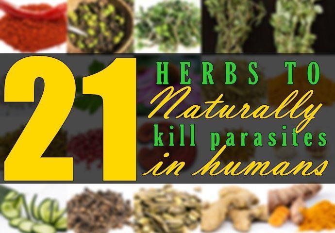 kill-parasites