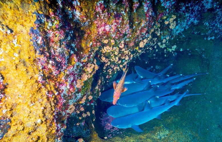 Alkaline Coral Calcium Benefits