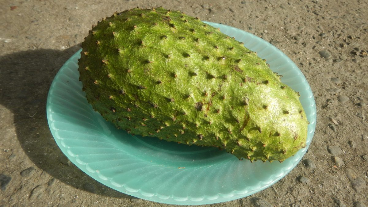Soursop_fruit